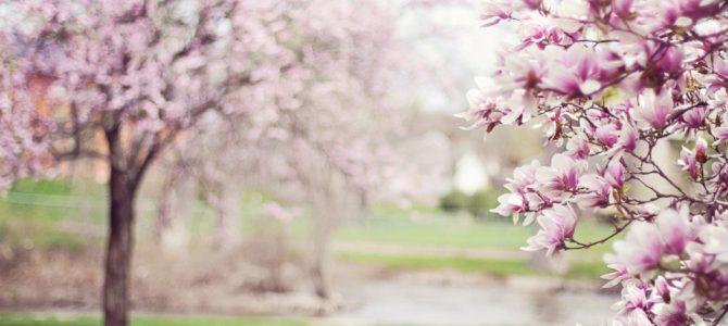 Frühlingsarbeiten
